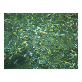 Colourful fish in clear water in Saint Lucia Postcard