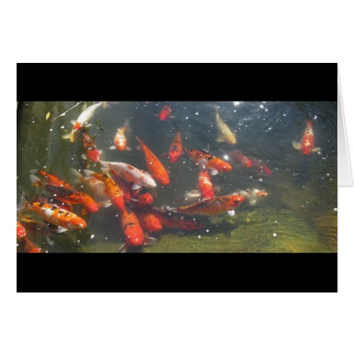 Colourful Koi Fish In a Pond Cards