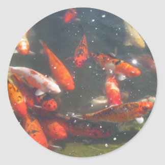 Colourful Koi Fish In a Pond Classic Round Sticker