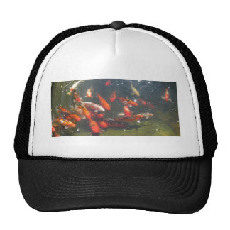 Colourful Koi Fish In a Pond Hat