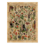 Colourful Meadow Flowers Herbs Dictionary Art Postcard