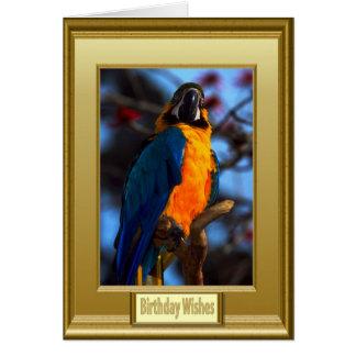 Colourful plummage card