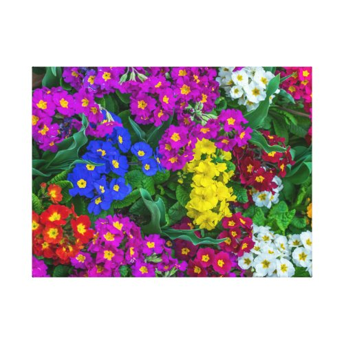 Colourful primroses canvas print
