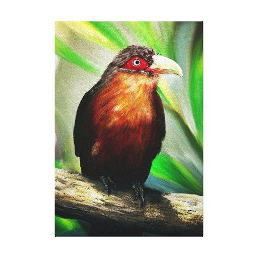 colourful tropical bird canvas print