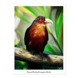 colourful tropical bird postcard