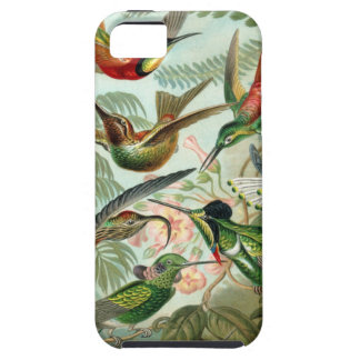 Colourful vintage art humming birds paradise found iPhone 5 case