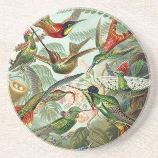 Colourful vintage art humming birds paradise found beverage coaster