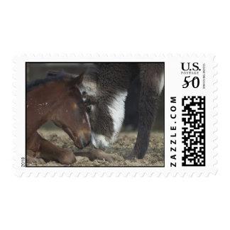 Colt and Donkey nuzzling Postage