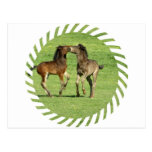 Colt and Foal Playing Postcard
