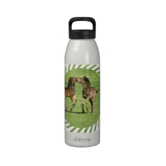 Colt and Foal Playing Water Bottle