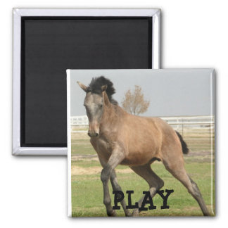 COLT AT PLAY MAGNET