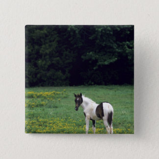 Colt grazing in a pasture with yellow flowers. pinback button