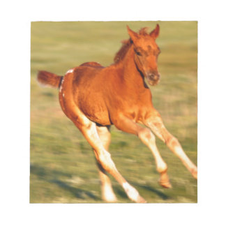Colt In Motion Notepad