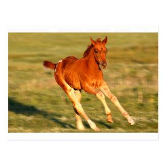 Colt In Motion Postcard