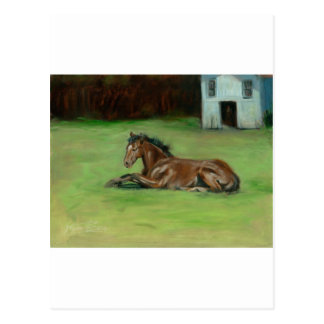 Colt painting quarter horse on items postcard