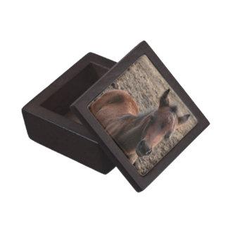 Colt Photo Premium Gift Box