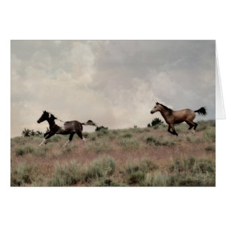 Colt Play Greeting Card