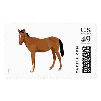 Colt Portrait Postage Stamp
