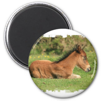 Colt Resting in Grass Round Magnet Magnets