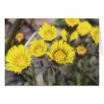Coltsfoot (Tussilago farfara) Flowers Greeting Card