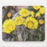 Coltsfoot (Tussilago farfara) Flowers Mouse Pad