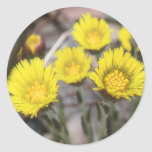 Coltsfoot (Tussilago farfara) Flowers Round Stickers