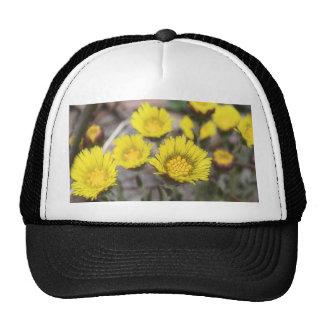 Coltsfoot (Tussilago farfara) Flowers Trucker Hat