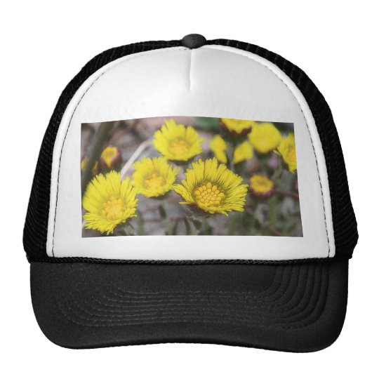 Coltsfoot (Tussilago farfara) Flowers Trucker Hat