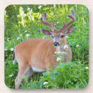 Columbia Black-tailed deer Coaster