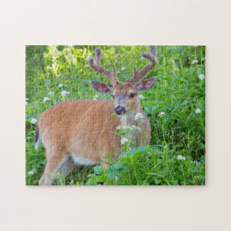 Columbia Black-tailed deer Jigsaw Puzzle