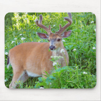 Columbia Black-tailed deer Mouse Pad