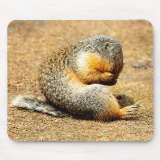 Columbia Ground Squirrel Mouse Pad