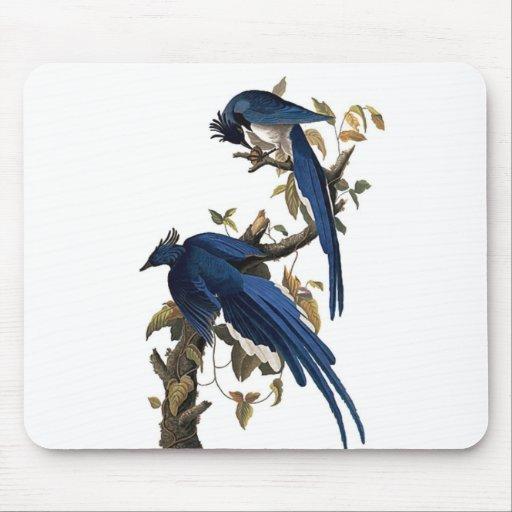 Columbia Jay el | John James Audubon Tapete De Ratones