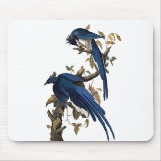 Columbia Jay | John James Audubon Mouse Pad