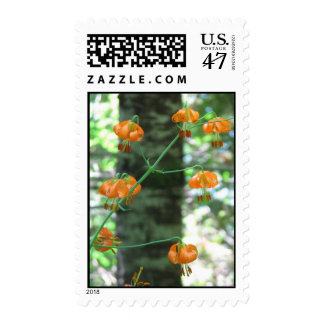 Columbia Lily - Oregon Postage
