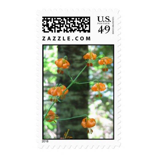 Columbia Lily - Oregon Postage