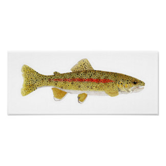 Columbia River Redband Trout Poster