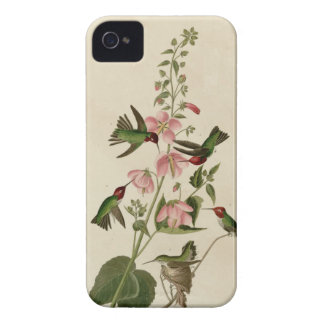 Columbian Hummingbird iPhone 4 Case
