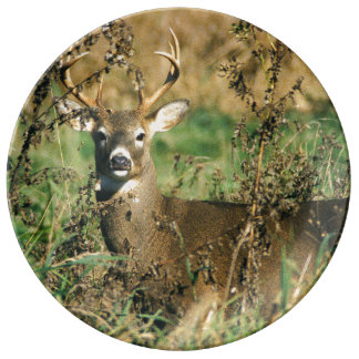 Columbian White Tailed Deer Dinner Plate