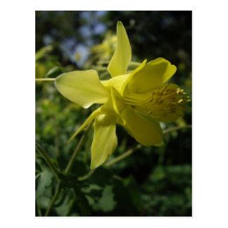 Columbine amarillo tarjetas postales