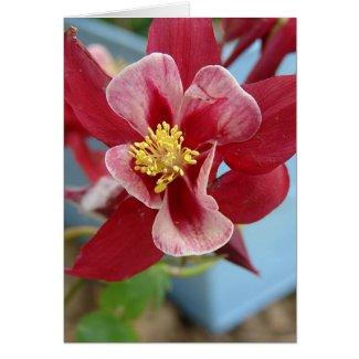 Columbine Flower card