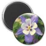 Columbine flower magnet