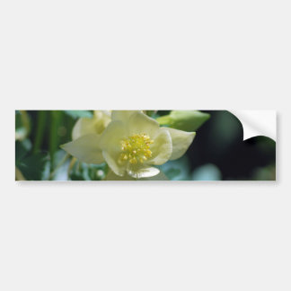 Columbine flower means to win bumper sticker