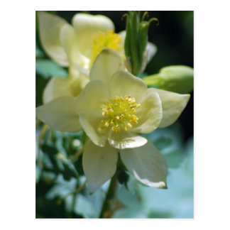 Columbine flower means to win postcard