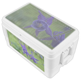 Columbine Flowers, 48 Quart Duo Deco Cooler