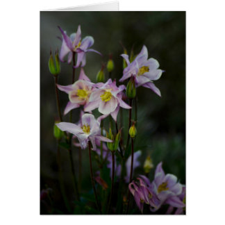 Columbine Flowers Note Card