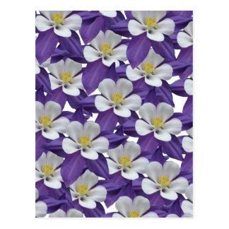 Columbine Purple and White Flower Pattern Postcard