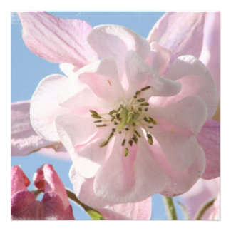 Columbine rosado florece invitaciones comunicado