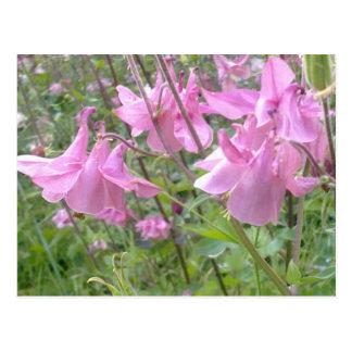 Columbine rosado florece la postal