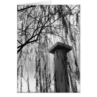 Column Under Weeping tree Black and White Picture Card